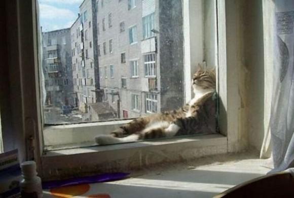 cats_chillin_02