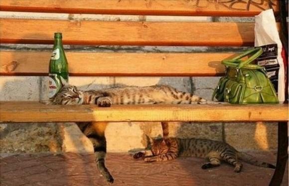 cats_chillin_03