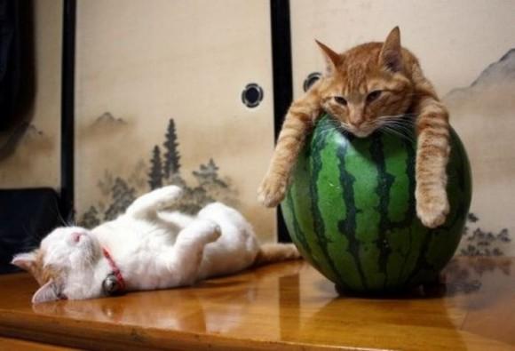 cats_chillin_04