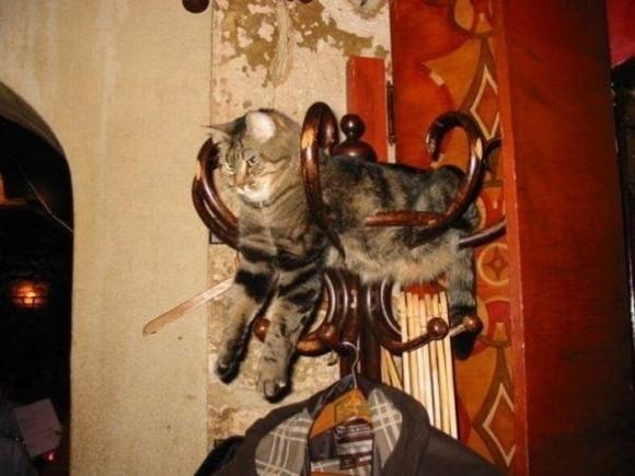 cats_chillin_05