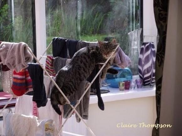 cats_chillin_08