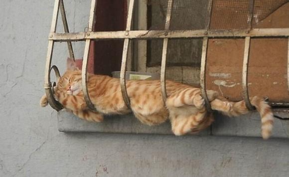 cats_chillin_11