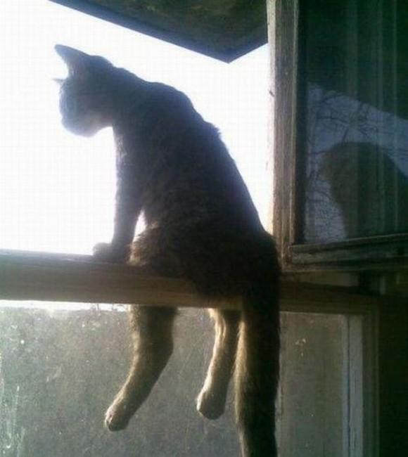 cats_chillin_12