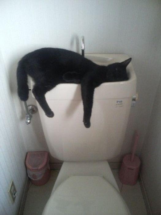 cats_chillin_13