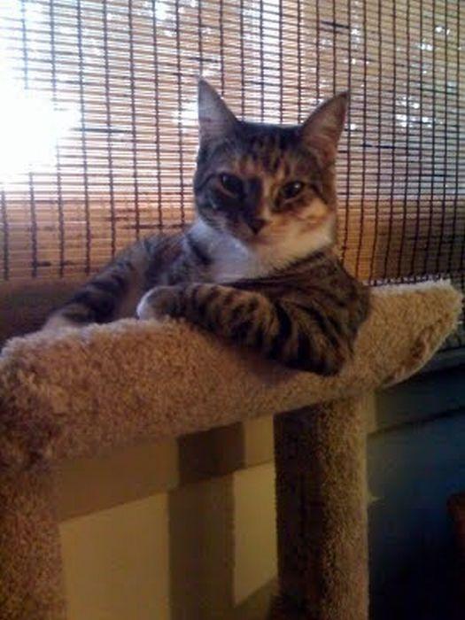 cats_chillin_16