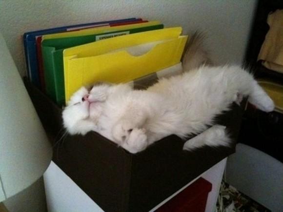 cats_chillin_17