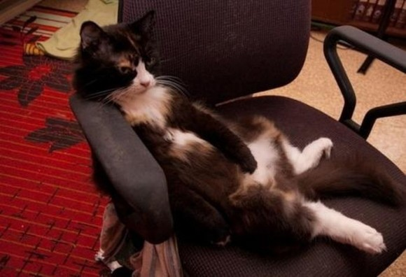 cats_chillin_18