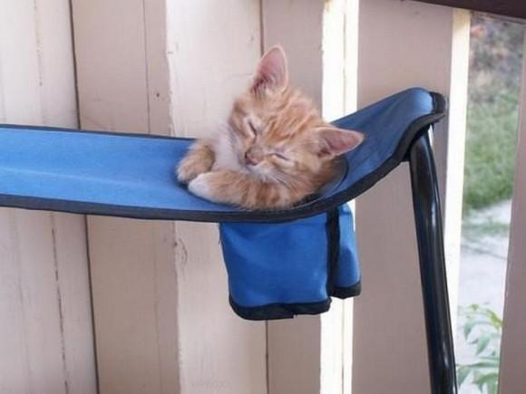cats_chillin_20