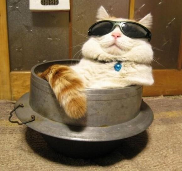 cats_chillin_28
