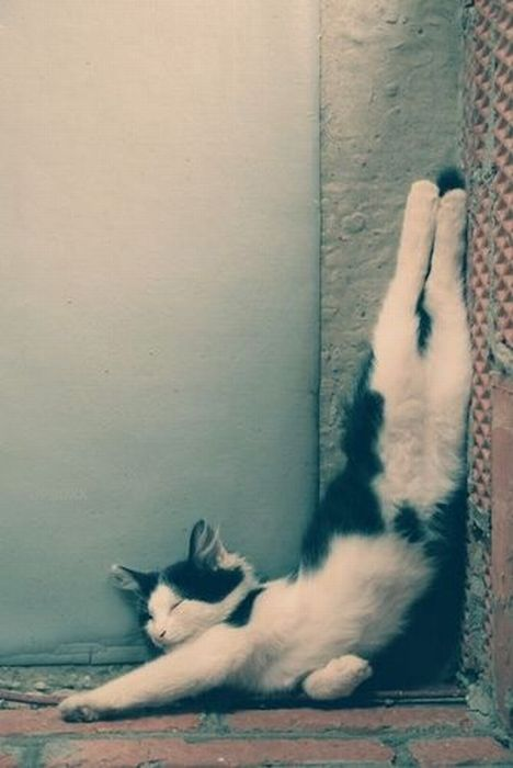 cats_chillin_29