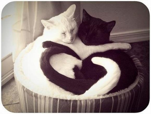 cats_chillin_31