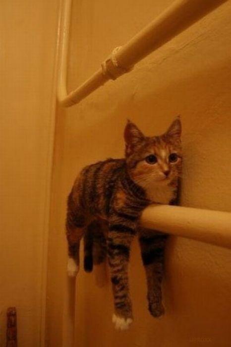 cats_chillin_32