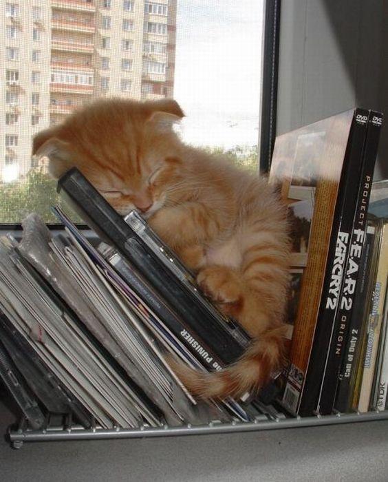 cats_chillin_39