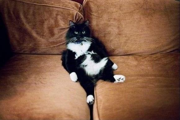 cats_chillin_44