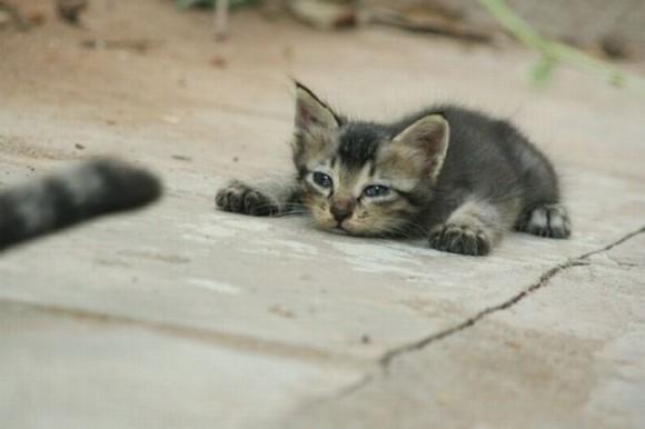 cats_chillin_45