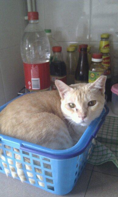 cats_chillin_47