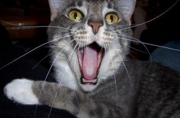 funny-face-cat03