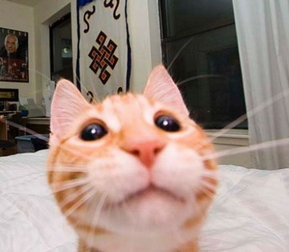 funny-face-cat12