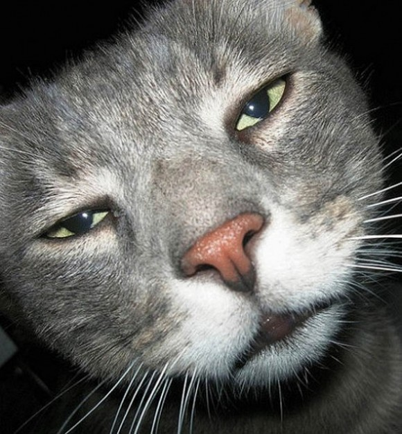 funny-face-cat14