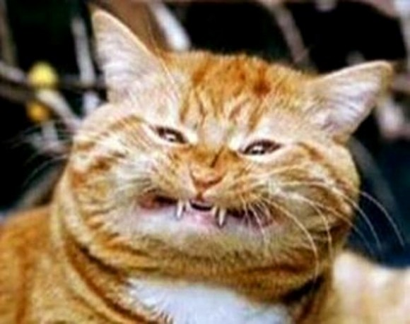 funny-face-cat17