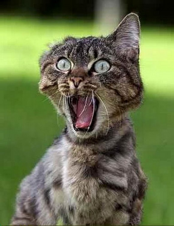 funny-face-cat21