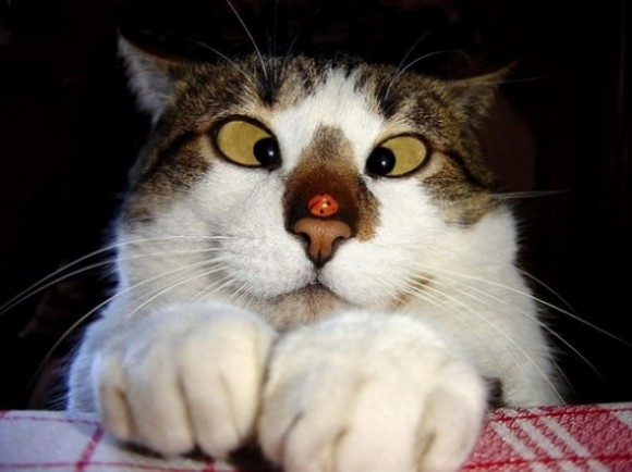 funny-face-cat22