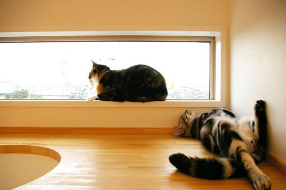 catFriendryHouse-03