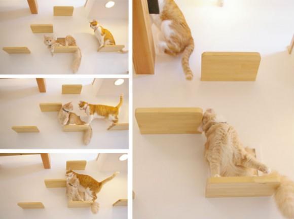 catFriendryHouse-07