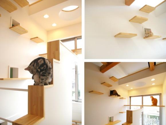 catFriendryHouse-08
