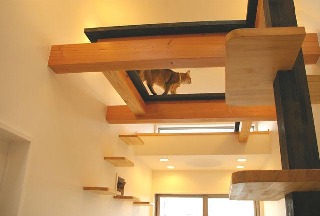 catFriendryHouse-09