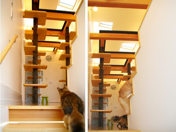 catFriendryHouse-11