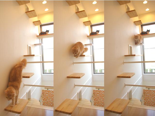 catFriendryHouse-12