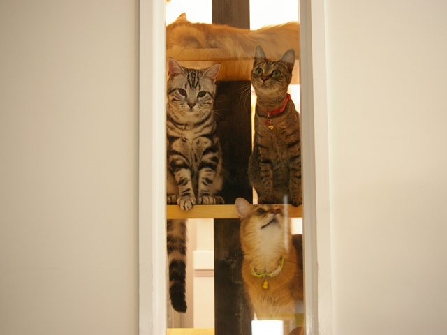 catFriendryHouse-15